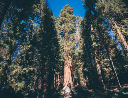 Sequoia National Park – Road Trip day 2